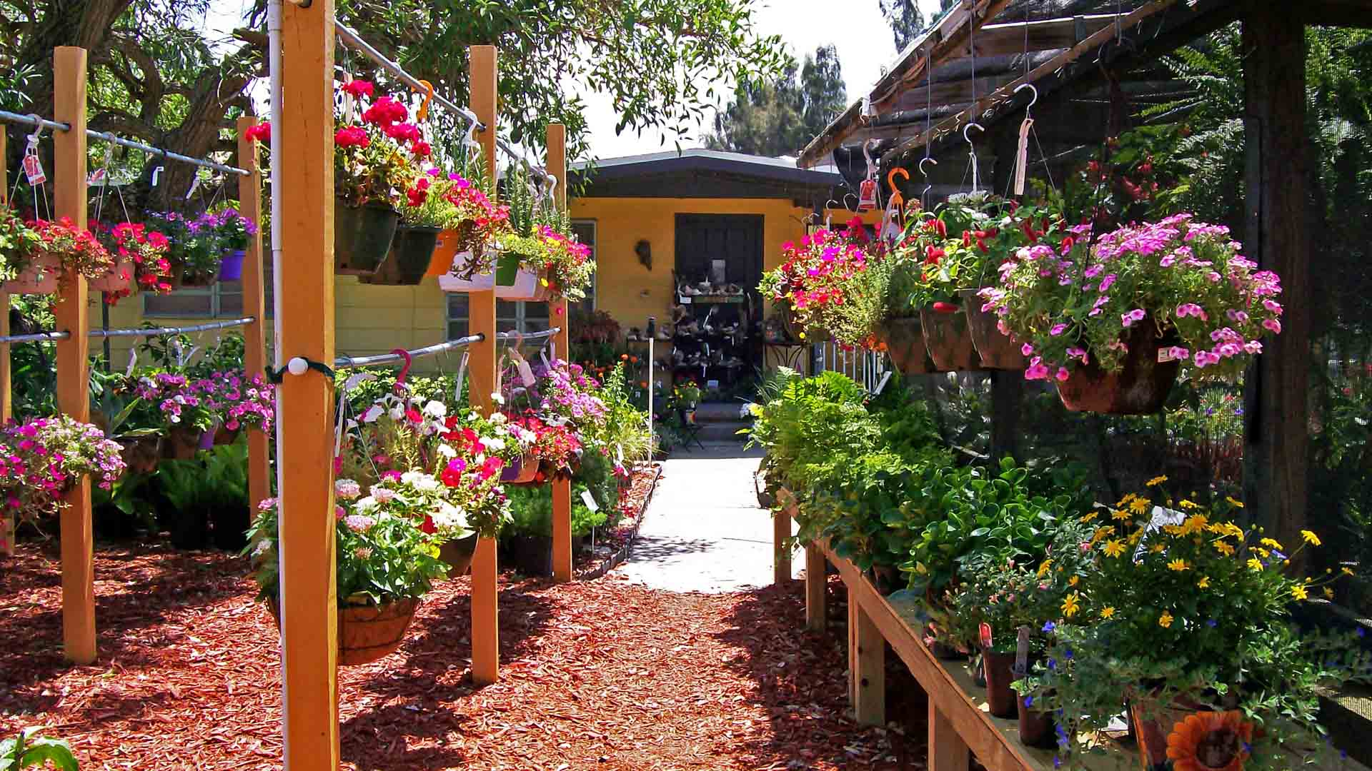 Background of hanging flower baskets at Sunman's Nursery in Fort Myers, FL.