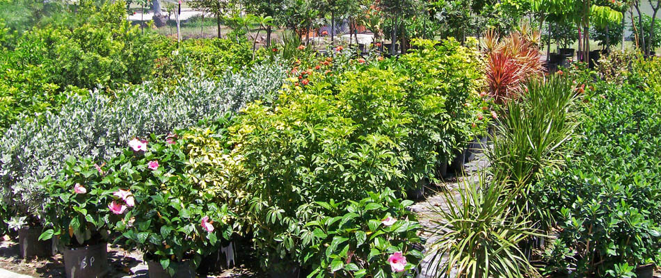 Florida Plant Nursery In Ft Myers Fl