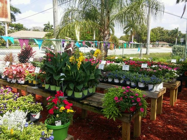 Nursery Fort Myers Thenurseries