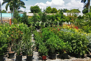 Ft Myers Landscaping Supply Nursery